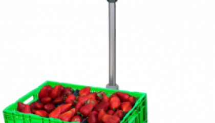 Strawberry Scale - SWIA Weighing Equipments Queensland